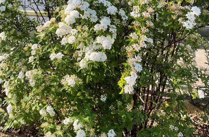 春、アーユルヴェーダでは増悪しやすいカパに気を付けて